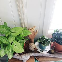 Another gorgeous sunny Saturday. I love autumn weather    .  .  #macrame #macrameartist #indoorplants #creativelife #indoorgarden #syngonium #houseplants #makersgonnamake #etsyau #craftsposure #wearethemakers #jungalowstyle #plantsofinstagram #botanicalpickmeup #atmine #cornerofmyhome #houseplantsofinstagram #plantsmakepeoplehappy #showmeyourboho #fittonia #macrameaustralia #creativebusiness #handmadehome #handmadeaustralia #handmade #vignette #houseplantvignette