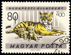 Hungary 1961 Panthera tigris