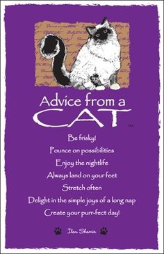☆ Advice From a Cat ~:By Ilan Shamir ☆