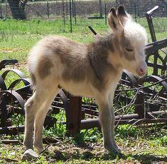 Donkey photo | Baby Cute Donkey Photos - Baby and Funny Animal Photos