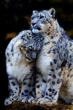 Outstanding -> Beautiful Cats!!!