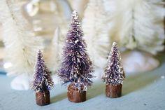 3 Old Lavender Bottle brush Trees
