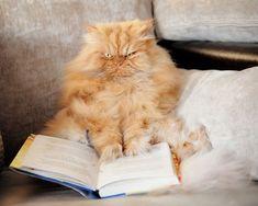 #garfi #angry #cat #book. #funny #cute