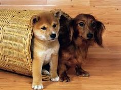 Image result for dogs and puppies
