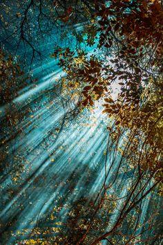 Plasmatics: Скрытые солнечного света Филиз Тулу (сайт)