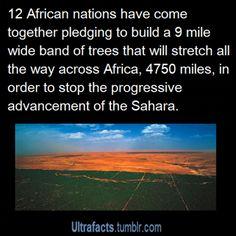 more info here http://en.wikipedia.org/wiki/Great_Green_Wall