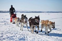 At least 150 dogs have died in the history of this cruel event, including four during the 2017 Iditarod. Enough is enough.