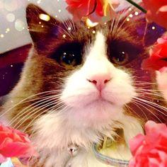 My cat is so cute @gigikittycat-#cameran #cameranapp