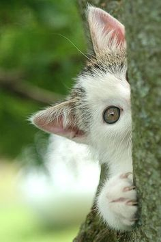 I see you .. ♥ッ ༺ß༻