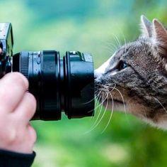 "** ""Yoo don'ts haz a lens fer dis close."""