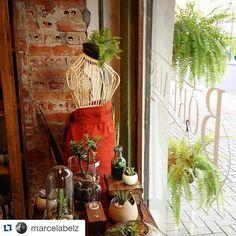 Estamos abertos hoje até as 16:30! Casa verde é casa feliz.  #plants #plantas #plantshop #samambaia #borealisplantas #crazyplantlady