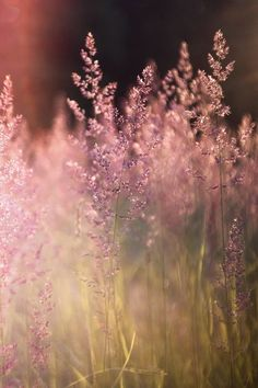 "swansong-willows: "" (via Pin by Trudy Hinrichs on Serene scenery 