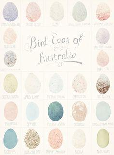 Bird eggs of Australia illustration, chart by Amy Borrell Australian Birds, Bird Feathers, Color Inspiration, Brand Inspiration, Hand Lettering, Illustration Art, Etsy, Easter Art, Hoppy Easter
