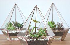 ZÖLD Celebramos el mundo de la botánica y la conexión con la naturaleza en la vida urbana. http://charliechoices.com/zold/
