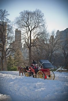 Carriage ride in the snow ~ Central Park, NYC!