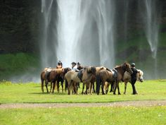 Blue Lagoon & Riding Tour - After a ride & lunch, unwind in a spa on a tour from Reykjavik