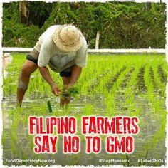 Filipino Farmers Say No To GMO. More here: http://thediplomat.com/asean-beat/2013/08/14/filipino-farmers-say-no-to-gmo/