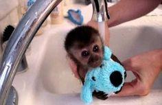ahhh baby mokey getting a bath!!
