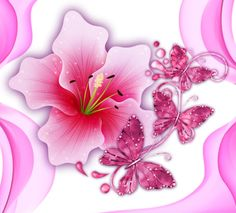 Niya'ile Renkli Dunya ®