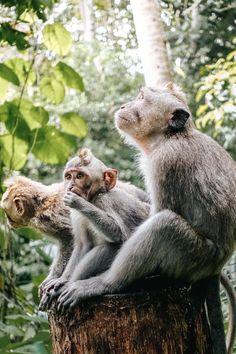 Bali Wedding, Destination Wedding, Monkey Forest Bali, Bali Travel, Adventure Awaits, Southeast Asia, Backpacking, Travel Inspiration, Travel Destinations