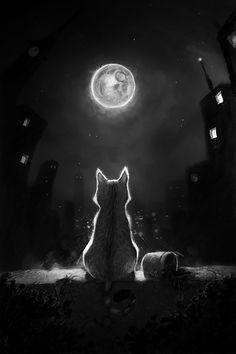 #Cat #blackandwhite #Moon