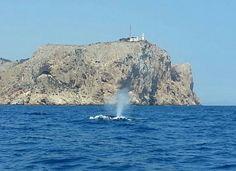 2015 Avistamiento_ballenas Xàbia Cap de Sant Antoni