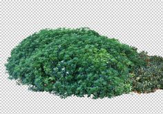 view from The United Kingdom by Gobotree, including England, London, cutout plants Tree Cut Out, Tree Shop, Photoshop, Landscape Architecture, Trees To Plant, Greenery, United Kingdom, Grass, Flora