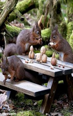 Squirrel Holiday Feast - they even have lovely centerpieces on their table! ❊