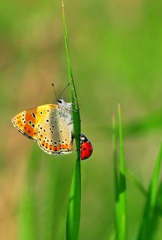 ladybug, butterfly