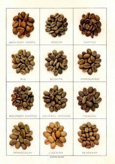 1911 coffee beans lithograph print