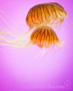 Chicago 6 Pink Jellyfish // 8x10 Fine Art by YellowBrickHome, $39.00