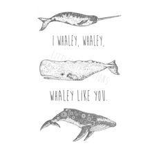 Image of I whaley, whaley, whaley like you.