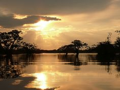 Cuyabeno - Ecuador Amazon. One of my favorite places I've been.