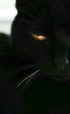black cat, love my Crunchy Kitty I Love Cats, Crazy Cats, Cool Cats, Beautiful Cats, Animals Beautiful, Hello Beautiful, Animals And Pets, Cute Animals, Black Animals