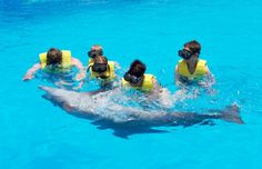 Dolphin Swim and Ride (DSR) in Cancun Swim and see dolphins from up close and then go on a fun belly ride! This interactive experience brings you closer to dolphins than you ever imagined.