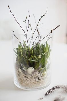 Spring or summer decoration using a wide glass cylinder filled with a bird nest, green plant and twigs. Lovely natural decoration