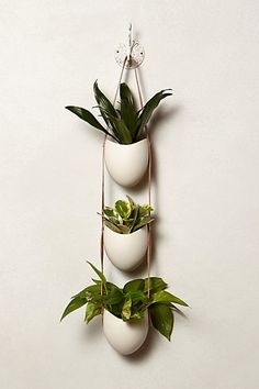 Leather-Latched Wall Planter - anthropologie.com - triple -- $168