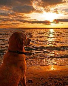 #matilhagourmet #sunset #qualidadedevida #alimentacaosaudavel #alimentacaonatural #gratidao #intadog #cachorro #praia #sc #bc