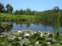 Étang du Domaine de Maizerets en été Nature, Golf Courses, Photos, River, Outdoor, Landscapes, Outdoors, Pictures, Outdoor Games