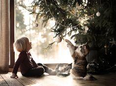 Elena Shumilova's magical, wintry photography: Boy and cat under a Christmas tree