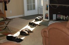 these are 4 VERY smart dogs...until the sun moves that is :P
