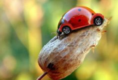 beetle http://3.bp.blogspot.com/-mLGWTBRdNWg/T6DR0Kq1P7I/AAAAAAAACxM/O7rrsOru60s/s1600/beatle%2Bbeetle%2Bvw%2Blady%2Bbug%2Binsect%2Bmachine%2Banimal%2Bphotoshop%2Bdigital%2Bart%2Bphoto%2Bmanipulation%2Bclever%2Bnature%2Btechnology.jpg
