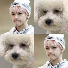 Sehun and vivi Baekyeol, Chanbaek, Sehun Vivi, Exo Memes, My Little Baby, Kpop, Star Vs The Forces Of Evil, Korean Music, Meme Lord
