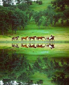 Horses are merely reflections of their riders and the effort that has gone into them.