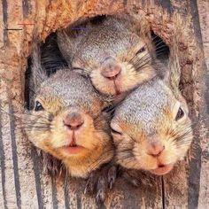 #hilariousanimals Cute Creatures, Beautiful Creatures, Animals Beautiful, Cute Funny Animals, Cute Baby Animals, Nature Animals, Animals And Pets, Small Animals, Wildlife Nature