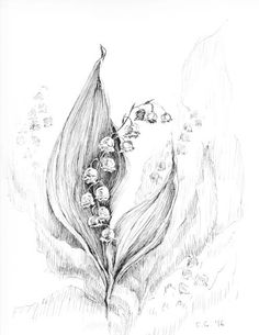 Lily of the valley art, original artwork, botanical sketches, black and white…
