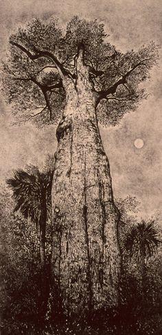 Ann Chernow, lithography #tree #art