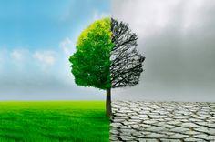 La metáfora de los dos árboles: una historia de crecimiento personal