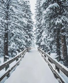 Winter is coming))))❄❄❄  Snowly forest>>>  Road in winter forest⛄⛄⛄