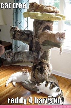 Cat Tree! #cathouse - What do cat want - Catsincare.com!